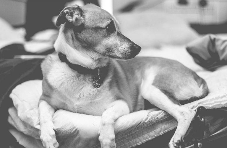 Budget Small Dog Bed - Post Thumbnail